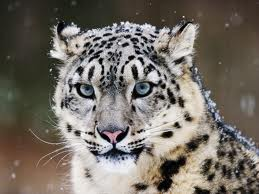 File:Kitty cat.jpg