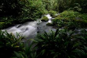 Jungle stream (La Selva Biological Station)
