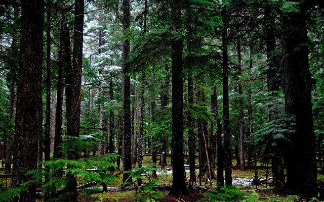 File:Forest 1 wallpaper.jpg