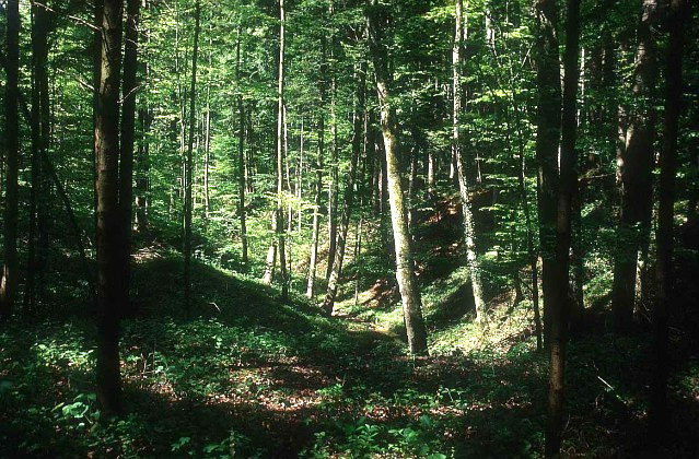 File:Forest-01.jpg