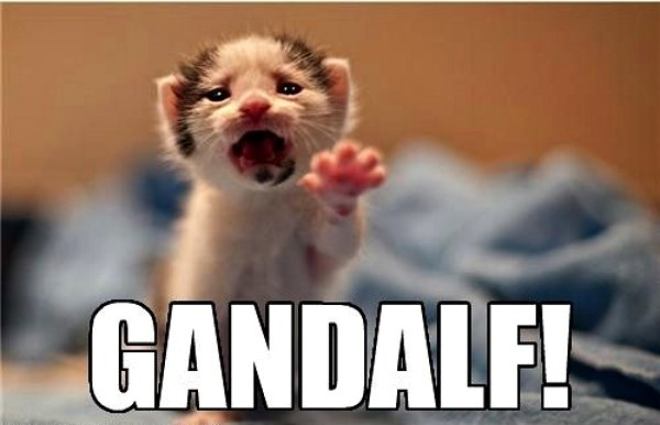 File:Gandalf-kitten.jpg