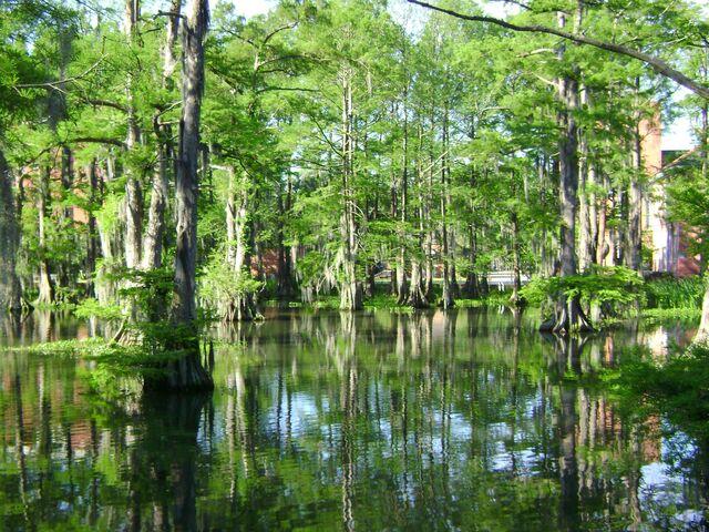 File:The Swamp 1.jpg