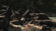 Cashmere-death
