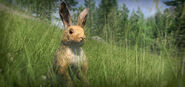 New animal eu rabbit