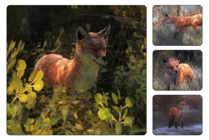Species red fox 700