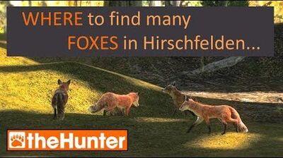 TheHunter Find Foxes in Hirschfelden