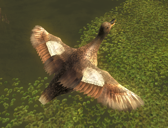 Duck gallery gadwall female