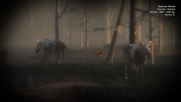 MrEnzo 2 piebald moose cows