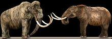 330px-MammothVsMastodon