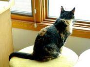 Jazlyn Lookin out Window