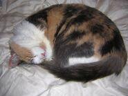 Jazlyn Kitteh Sleeping