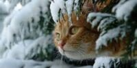 Keeping your cat safe in Winter