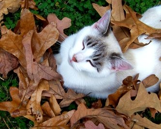 Kitty in fall time!!