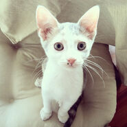 20121029-catster-cats-of-instagram-calendar-1