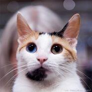 Kitty 44335566