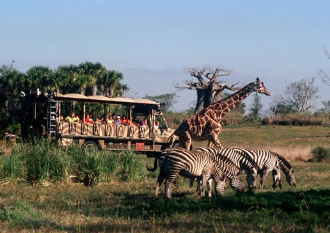 File:Animal-kingdom-safari.jpg