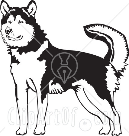 File:26525-Clipart-Illustration-Of-An-Alert-Alaskan-Malamute-Dog-Holding-His-Tail-Up-Black-And-White-1-.jpg