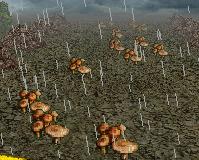 Crimini Vulgaris Mushroom