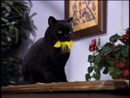 Salem Eats a Coukoo Bird