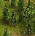 File:Pineforest.jpg