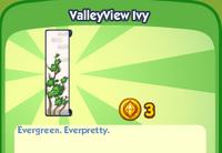 ValleyView Ivy