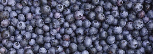File:Blueberries--1400x500.jpg