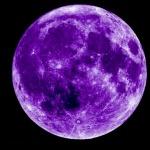 File:Le Purple 月.jpg