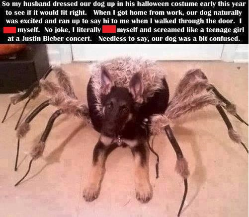 File:Dog spider costume.jpg