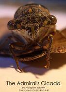 Admiral's cicada