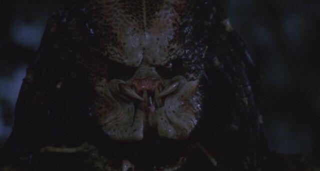 File:-1 Stan Winston Predator.jpg