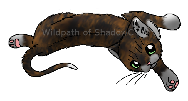 File:Tortoiseshell cat.personal.pxd.png