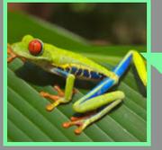 Gregs user frog