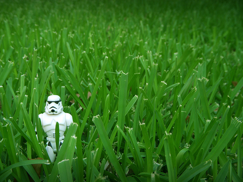 File:I Fought The Lawn ... And The Lawn Won.jpg