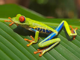 File:Frog2.png