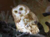 OWLwonderpets