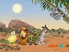 Save the Kangaroo