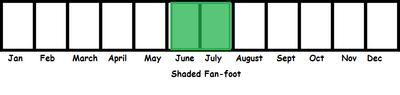 Shaded Fan-foot TL