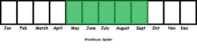 Woodlouse Spider TL