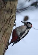 Birds.2010 2997