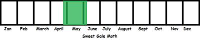 Sweet Gale Moth TL