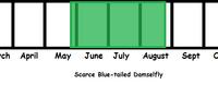 Scarce Blue-tailed Damselfly