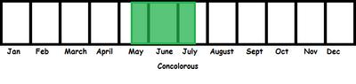 Concolorous TL