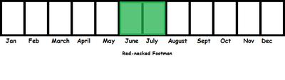 Red-necked Footman TL