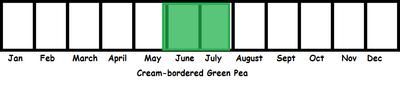 Cream-bordered Green Pea TL