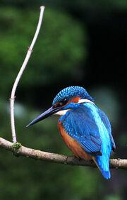 Birds.2009 413