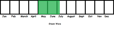 Cream Wave TL