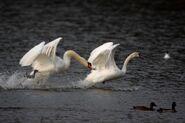 Birds.2011 1217