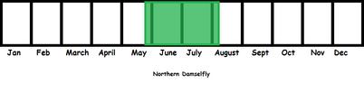 Northern Damselfly TL