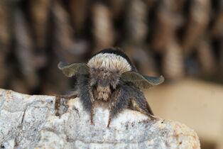 December Moth close up 1