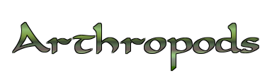 File:Arthropods.png